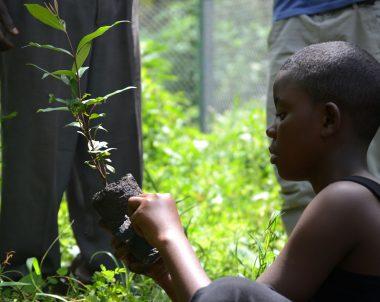 Campagne de sensibilisation sur les plantules germées à partir des graines retrouvées dans les crottes des Gorilles et des Chimpanzés