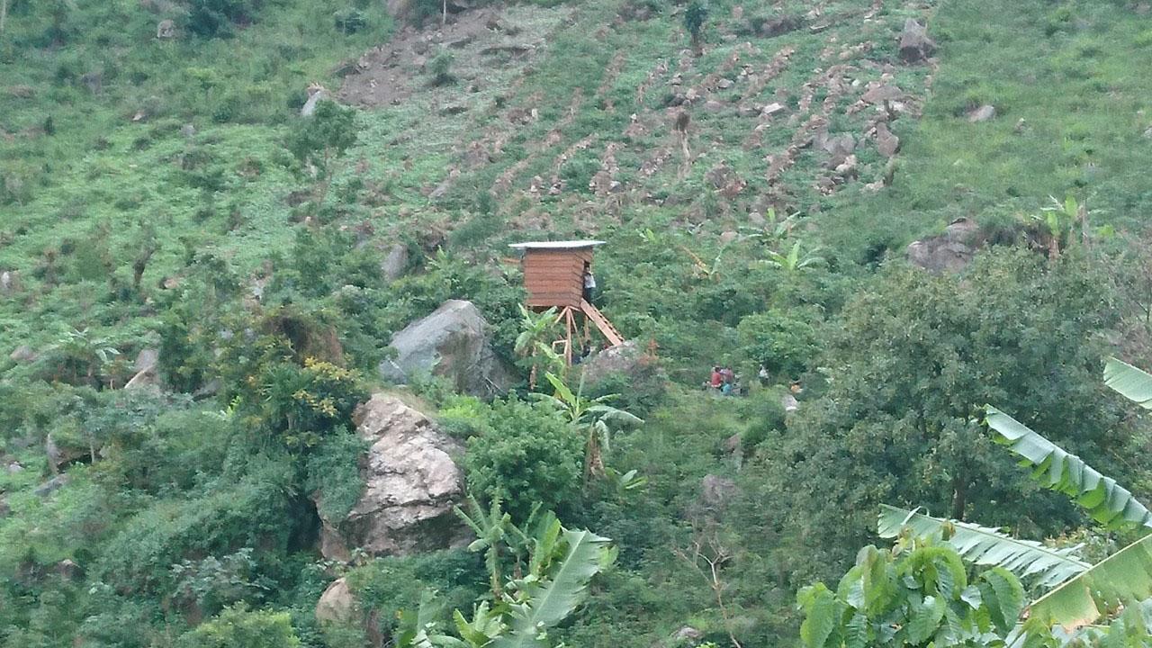 Installation des miradors pour  observer les singes bleus de Schouteden sur l'île Idjwi.