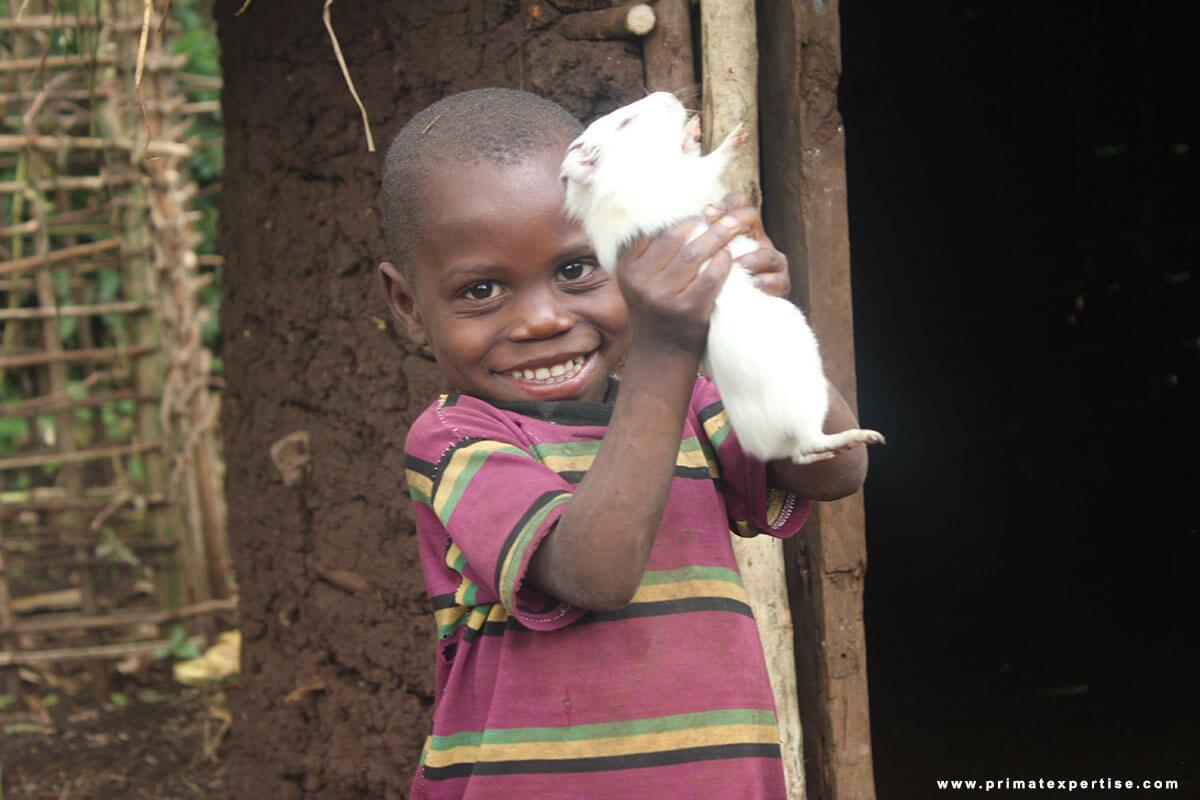 Elevage des cobayes associé aux jardins potagers pour les populations vulnérables vivant autour du Parc National de Kahuzi Biega